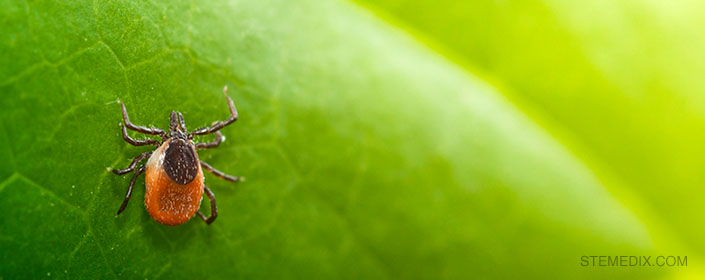 stem cells lyme disease tick