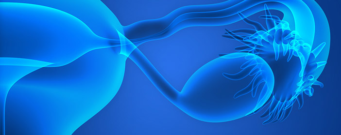 Umbilical Cord Stem Cells Ability to Restore Damaged Ovaries
