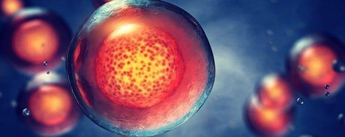 umbilical cord stem cell transplant