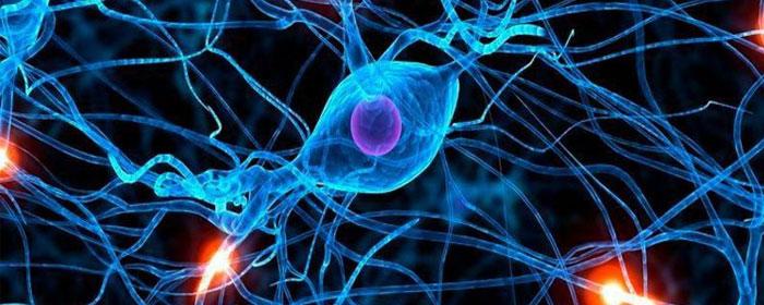 Stem Cells Therapy For Neurodegenerative Diseases Stemedix