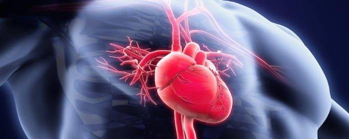 Stem Cells Injected into the Heart Can Improve Blood Flow and Heart Function after Heart Attack