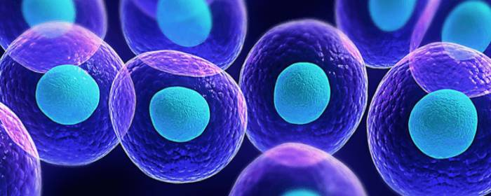 Stem Cells Can Act as Carriers for Therapies