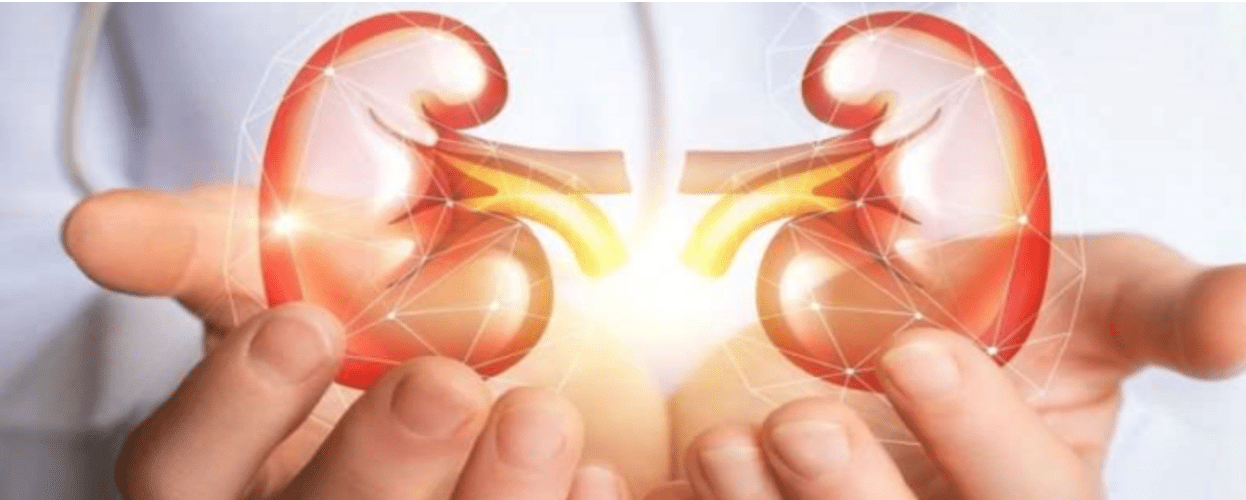 Could Stem Cell Therapy Help Patients with Kidney Disease?