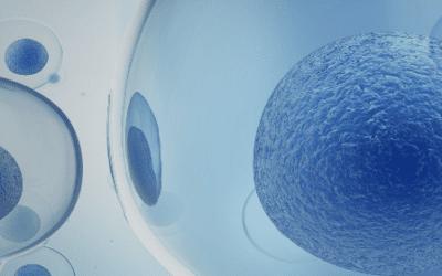 Enhancing Bone Healing with Mesenchymal Stem Cells