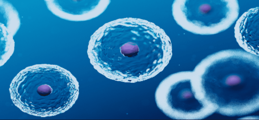 Stem Cell Treatment Explained: A Beginner's Guide to the Regenerative Therapy
